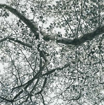 日高理恵子 「空との距離 II」の画像
